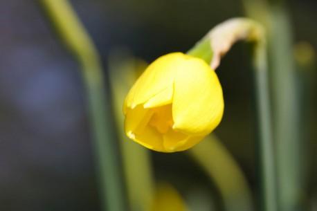 Fotografia eventi macro natura fiori fioreia